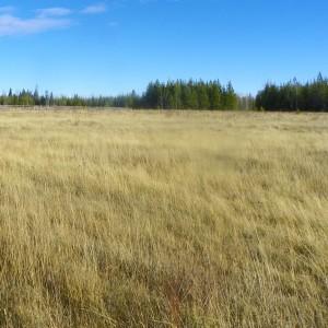 198 acres