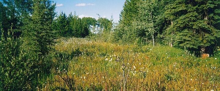 21.5 Acre Property on Horsefly Road near Rose Lake - 3655 Horsefly Road, 150 Mile House BC