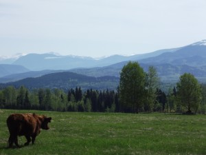 A pasture with a view