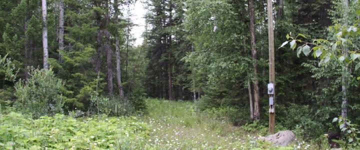 2 Acre Lot near Horsefly Lake - LOT 28 Rodman Road, Horsefly BC