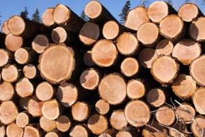 decked logs