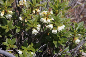 Wild flowers on the mountain