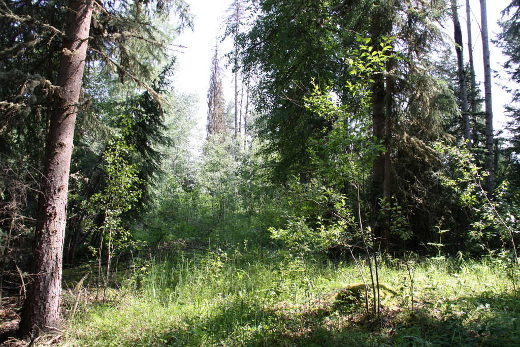 5730 Horsefly Road, Horsefly BC - One Acre View Lot in Horsefly Village
