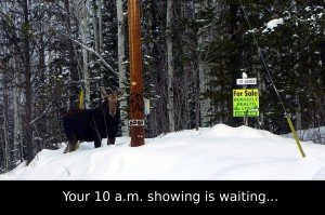 moose customer?